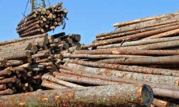 Projeto cria regras para compra de madeira pelo poder público