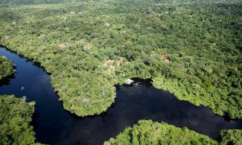 Senado aprova projeto que incentiva a recuperação florestal